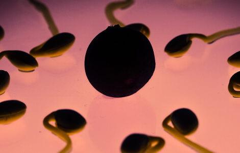 Eine Heidelbeere und mehrere Samen verdeutlich das schwanger werden.